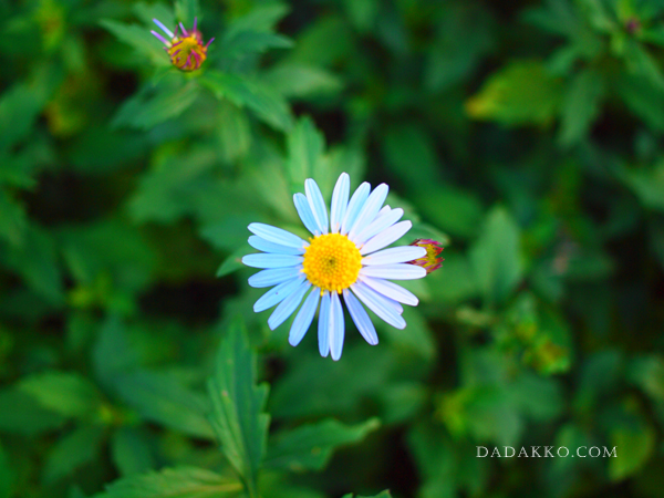 帰り道の花
