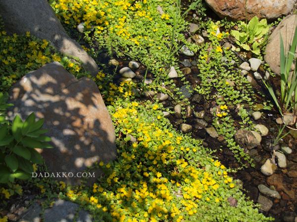 川辺の花たち
