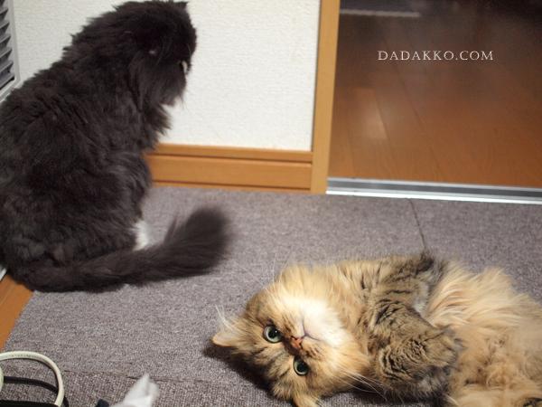 無視するネコこびるネコ