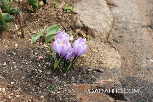 春を見つけたよ